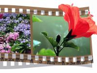 Video Tributes (DVD Presentation)