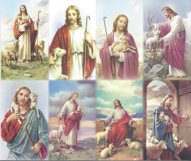 Shepherd Series Set