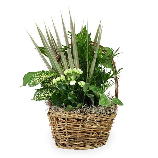 Medium Basket Garden